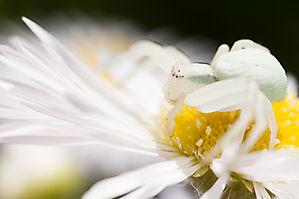Les araignées de nos jardins